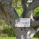 Poisonwood Tree Warning.jpg