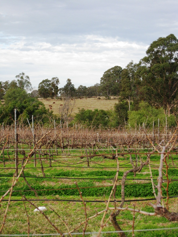 Hunter Valley is the wine producing area of New South Wales.